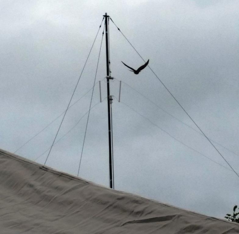 Photo of HF wire antenna above tent, large bird flying in background